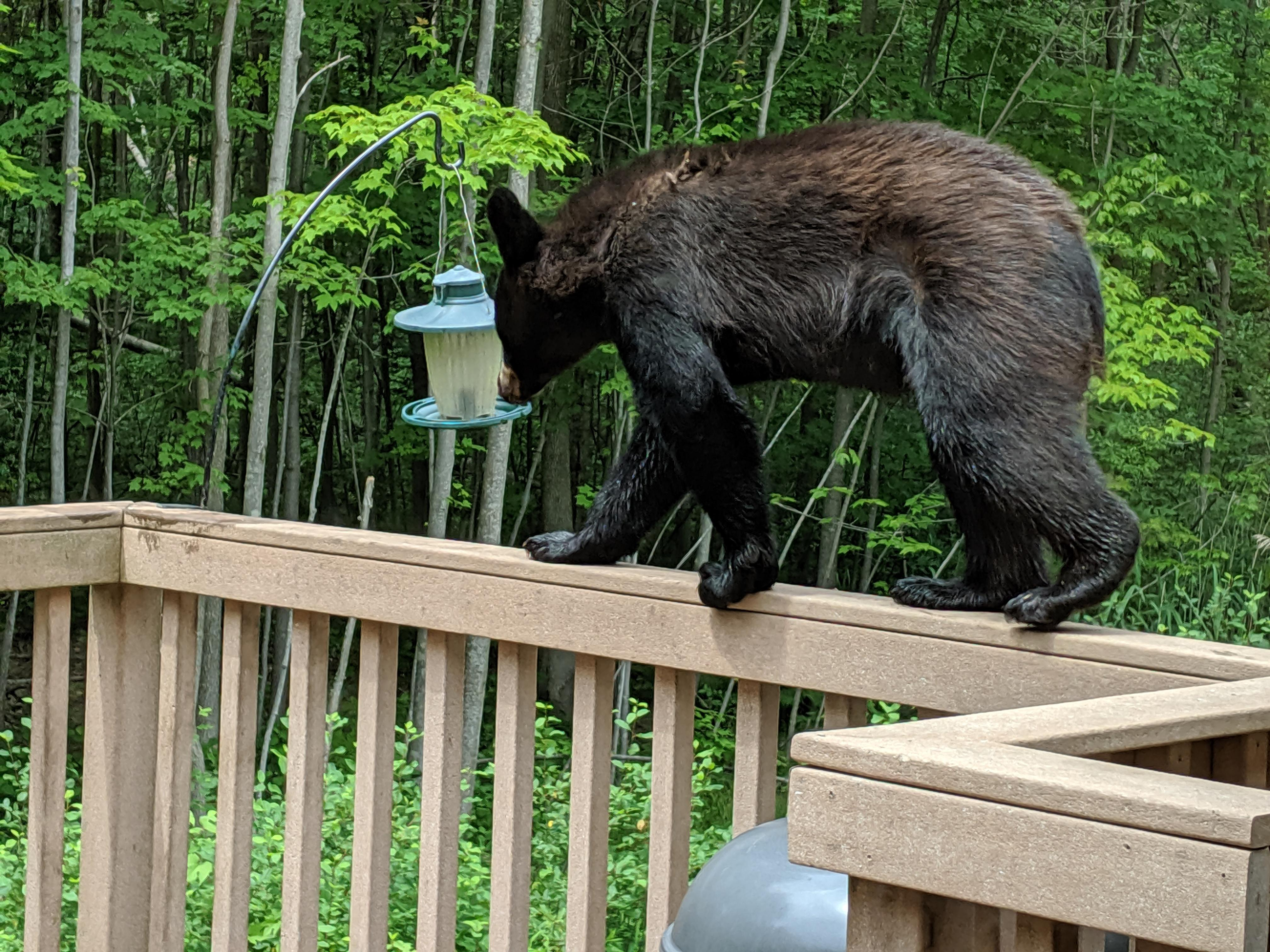 A bear sniffs around a bird feeder in Suamico July 1, 2019. (Photo courtesy Sherri Baierl)