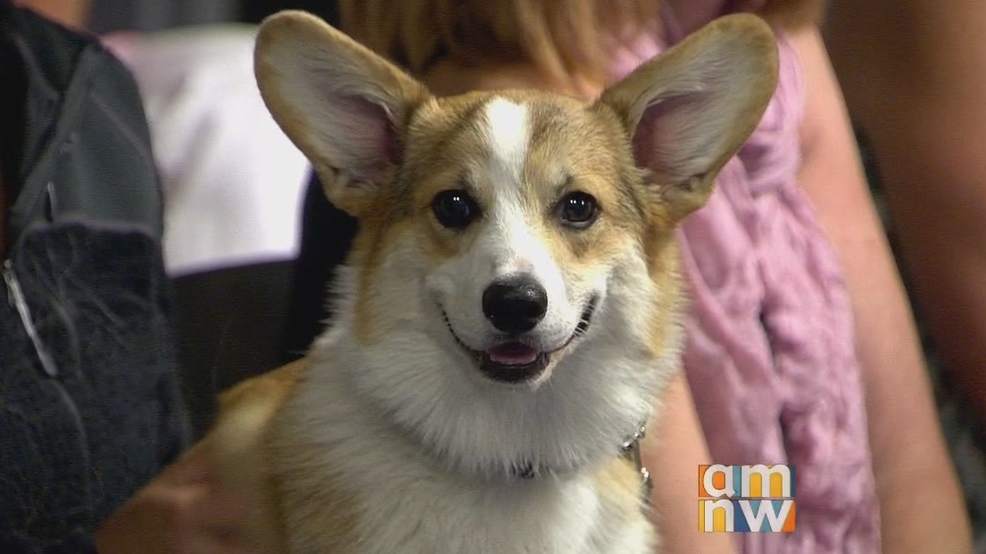 10th Annual Corgi Walk in the Pearl