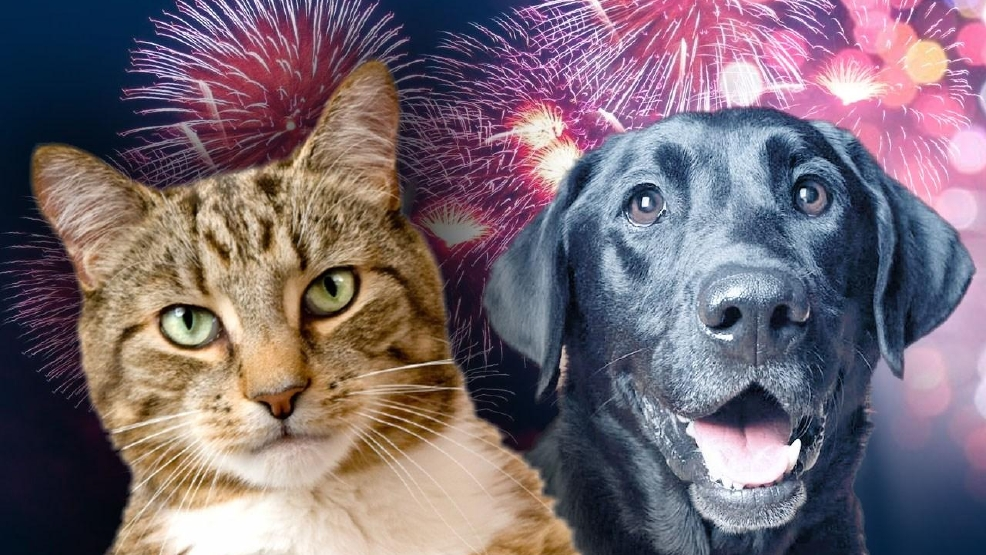 A cure for your pet's fireworks anxiety   WOAI