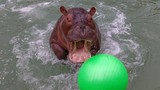 San Antonio's new Hippo has a family connection