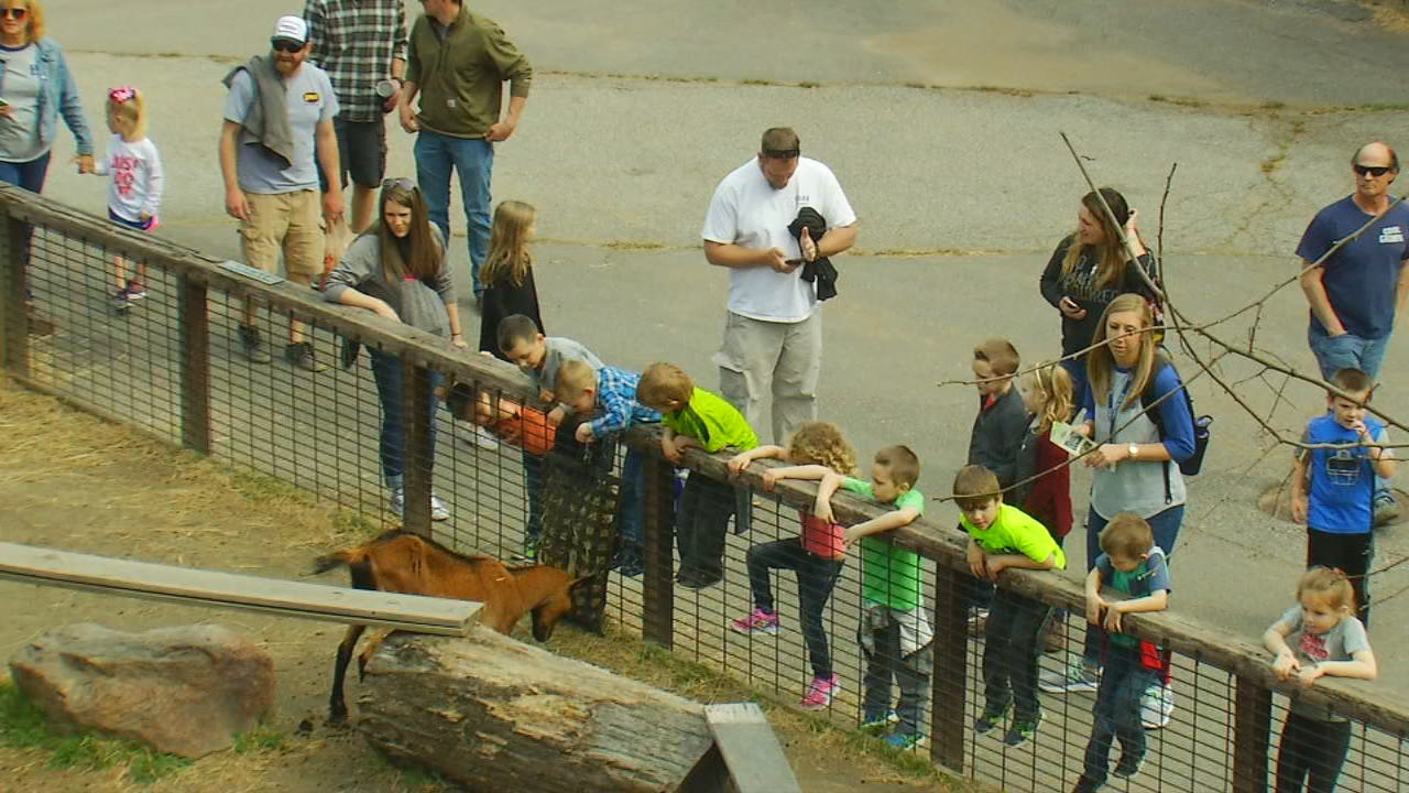 The Western North Carolina Nature Center's otter feeding was one of the middle school students' first stops for the week as part of the Into the Wild STEM (science, technology, engineering, math) camp. (Photo credit: WLOS staff)