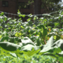 This urban farm is located in New York City public housing