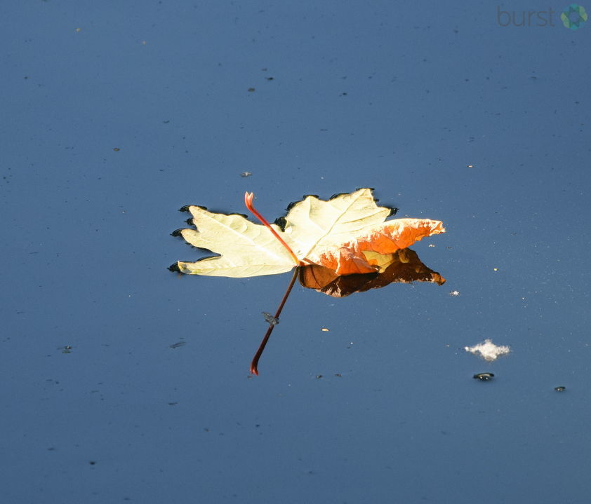 Michael Fischer shared this photograph of a leaf on a pond near the Eugene Country Club via BURST.com/KVAL