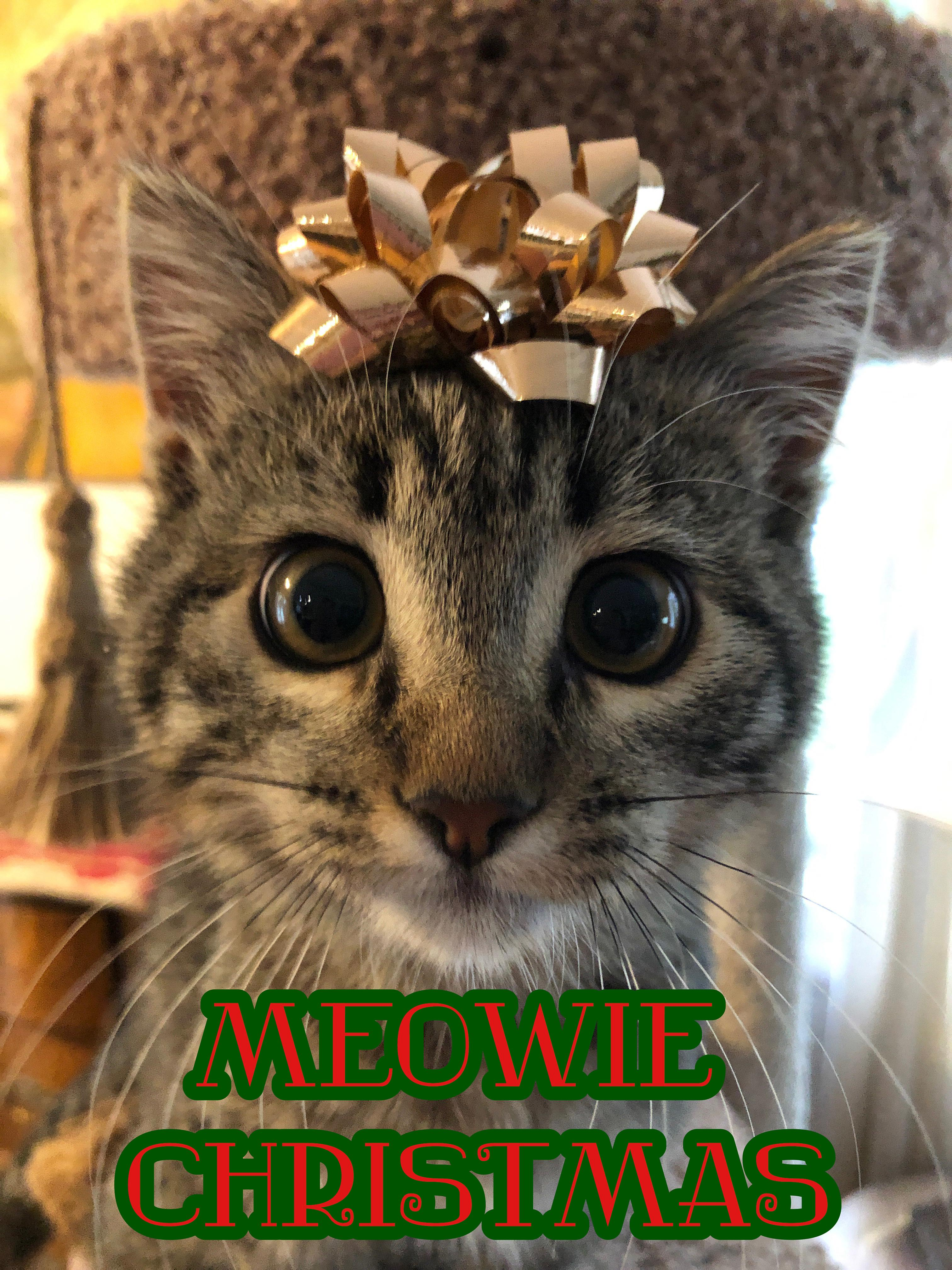 Sarah Bronson created this image of her new kitty, Bodhi, all ready for the holidays. She adds that Bodhi was adopted from the county shelter, and encourages anyone considering a new pet for Christmas to adopt.