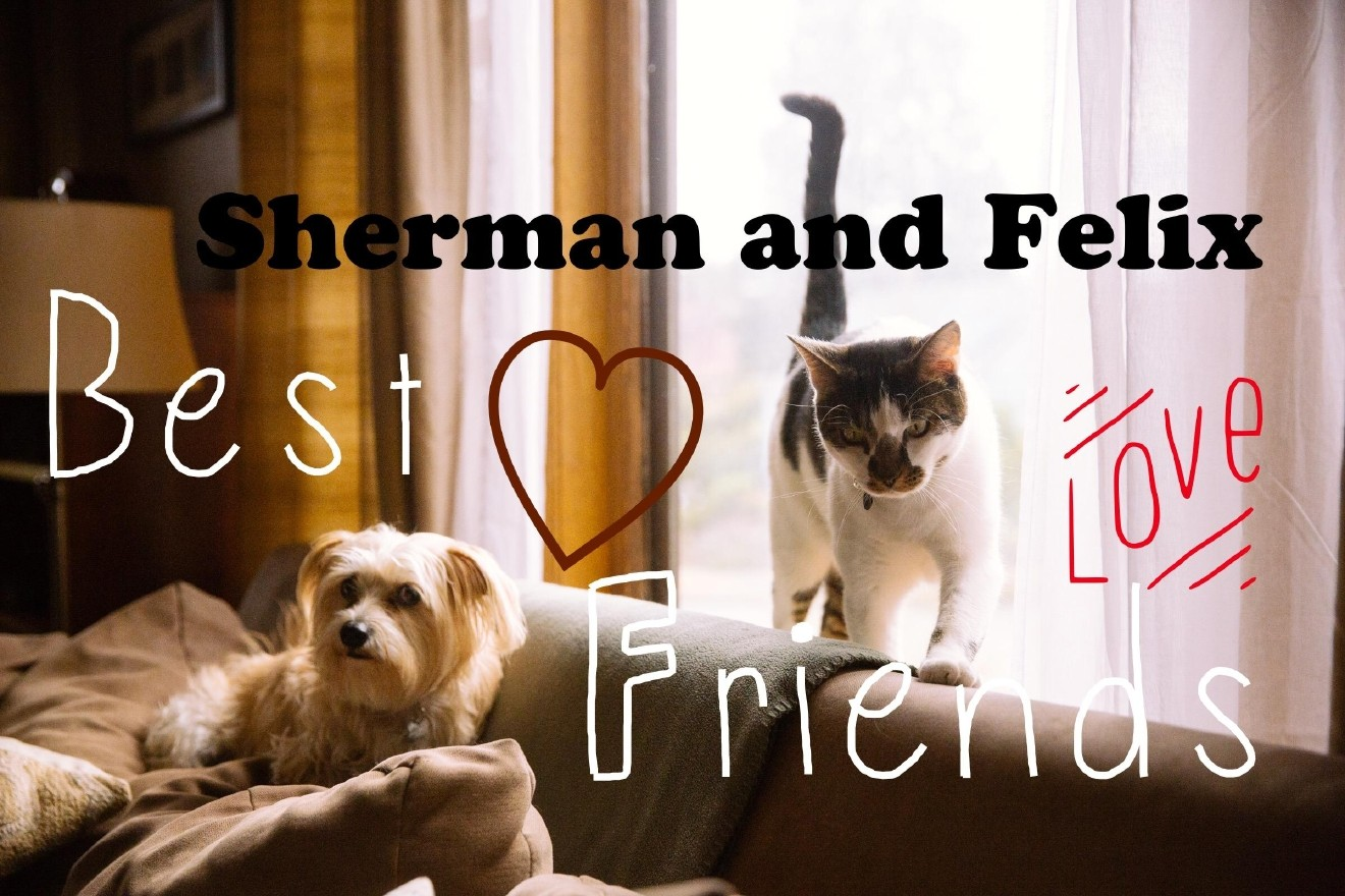 This week our Seattle RUFFined spotlight features two best friends, Richard Sherman (cat) and Felix Hernandez (dog). Sherman loves exploring, food and laying out in the sun while Felix loves stuffed animals, string cheese and his bff Sherman. They live in Seattle with mom and dad Katherine and Lowell, and sisters Anna and Emily. The Seattle RUFFined Spotlight is a weekly profile of a local pet living and loving life in the PNW. If you or someone you know has a pet you'd like featured, email us at hello@seattlerefined.com or tag #SeattleRUFFined and your furbaby could be the next spotlighted! (Image: Joshua Lewis / Seattle Refined)