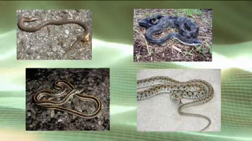 What to do if you find a snake in your garden