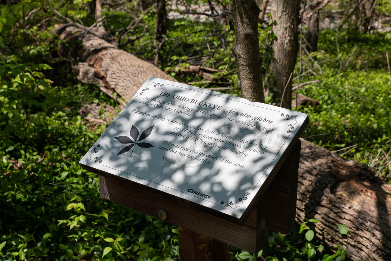 <p>Signposts located throughout the space educate hikers about the trail, the various tree species found within them, and information about the Eagle Scout projects that provided the signposts themselves. / Image: Elizabeth A. Lowry // Published: 5.12.20</p>