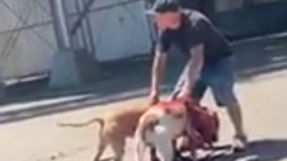 Dog Fight: Fresno Police seeking to question man in dog