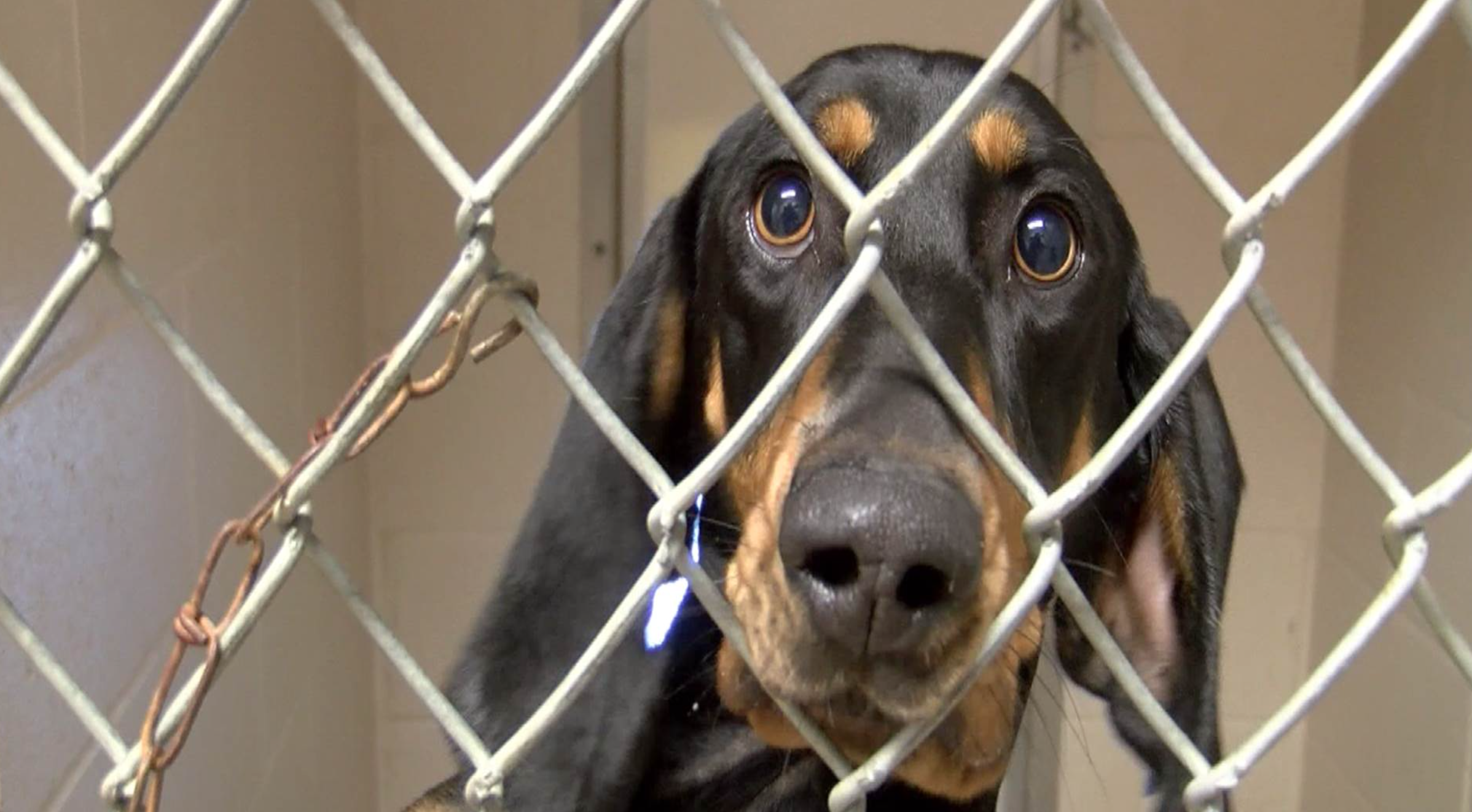 Animals from Texas were kept in the Louisiana shelters to be close if owners looking for their pet came forward. Now they are looking to find them a forever home in northern Michigan.