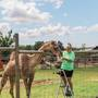 Camel at northern Michigan petting zoo turns 10