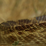 Snake bites on the rise across the state
