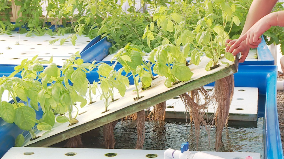 Oneida Nation Harvests Fish And Produce From Self