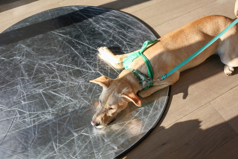 This pup just wanted to relax on our reflector.{&amp;nbsp;} (Amanda Andrade-Rhoades/DC Refined)<p></p>