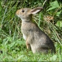 More than 500 rabbits dead after eating Commercial Rabbit feed