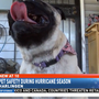 Keeping your pets safe during hurricanes